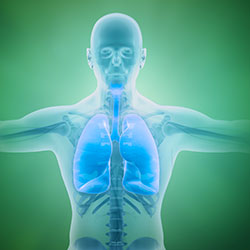 Il ruolo della respirazione durante l'attività fisica